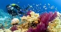Snorkelling and Seeing Coral at Tai Islet - Con Dao
